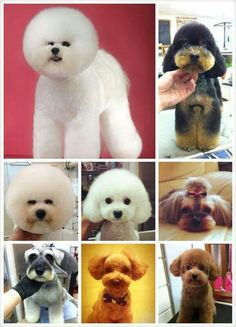 Beautiful heads of grooming