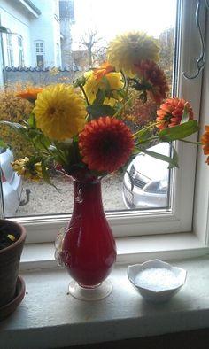 Sidste bid af sommeren. Farmors vase. Morgenfruer. Geoginer.