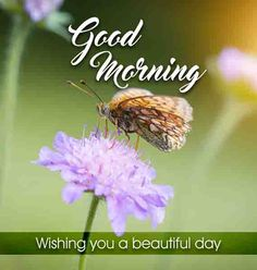 Simple Cute good morning image with flower wishes Beautiful Good Morning Wishes, Cute Good Morning Images, Good Morning Images Flowers, Latest Good Morning, Good Morning Gif, Morning Pictures, Good Morning Quotes, Inspirational Good Morning Messages, Good Morning Love Messages