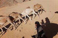 """A few years ago we went to the desert of Algeria to do a camel trek which started in the white-washed oasis town of Djanet. A dream come true. Five days with camels a cook a guide and a camel caretaker wandering through Tassilis intoxicating landscape of palm-groves wadis and dunes. I was in nature for days seeing nobody except a few of Tassili's Tuareg nomads passing by on their camels"" says photographer and #offsetartist Mirjam Bleeker of her travels. For our recent group show we asked 7…"