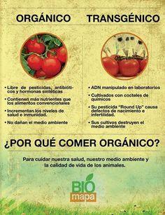 Comparación de productos orgánicos contra transgénico.