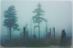 Dark forest by DominikaAniola.deviantart.com on DeviantART