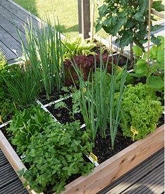 Über den Genialen Gemüsegarten - Der Geniale Gemüsegarten