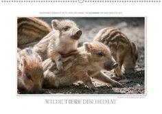 """Endlich zu haben, die österreichische Version meines Kalenders """"Wilde Tiere der Heimat"""" ;)   Emotionale Momente: Wilde Tiere der Heimat. / AT-Version"""