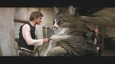 Cats And Star Wars: A Photo Series - World's largest collection of cat memes and other animals Funny Cat Photos, Funny Cats, Funny Animals, Funny Pictures, Cute Animals, Tango, Japanese Cat, Picture Comments, Star Wars
