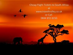 Cheap Flight to South Africa. Now your journey to South Africa will be even more fun! Grab exclusive deals and discounts on all flights bound for South Africa with Travel Trolley! Hurry Book Now! African Tree, Book Cheap Flight Tickets, Travel Trolleys, All Flights, Evergreen Forest, Tree Silhouette, Day And Time, People Art, More Fun