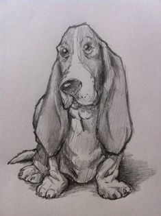 How to Draw a Basset Hound Dog
