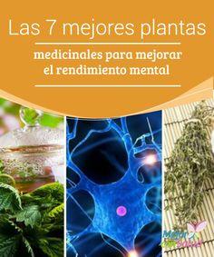 Las 7 mejores #PlantasMedicinales para mejorar el #RendimientoMental   Las propiedades de algunas plantas medicinales son ideales para mejorar el rendimiento y la salud mental. Te compartimos las 7 mejores.  #RemediosNaturales