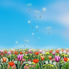 Spring flowers and light blue sky. Digital Illustration. Spring Holiday background with spring flowers meadow.