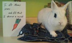 Bunny Shaming (22 pics) - Sarcastic Charm