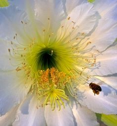 Busy bee Photo by Inge Hawkins -- National Geographic Your Shot