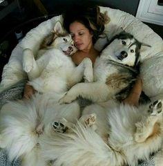 Likes, 113 Comments - Puppies Cute Husky, My Husky, Husky Puppy, Alaska, Shiba Inu, Akita, Cute Puppies, Dogs And Puppies, Canis Lupus