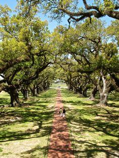 Oak Alley Plantation, NOLA