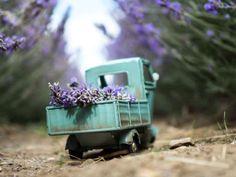 Es originario de Suiza. Foto: Kim Leuenberger - atraccion360.com
