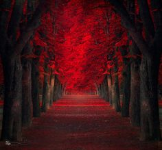 Occupation: Girl | odditiesoflife: The Most Beautiful Trees in the...