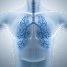 Respiratory system - Dr. Axe