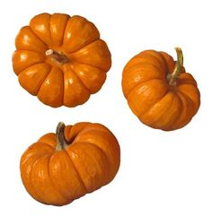 Growing Miniature Pumpkins in Containers