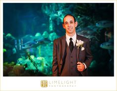 Groom, FLORIDA AQUARIUM Weddings, Limelight Photography, Wedding Photography http://stepintothelimelight.com/