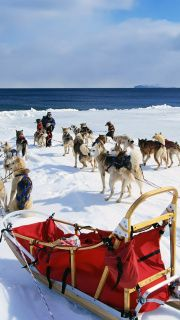 Take a ride on an Alaskan Dog Sled    For most Alaskan locals this isn't a day-to-day way of getting around, but for tourists it's a unique way to explore the area. The best time to go sledding in Alaskais January-March.