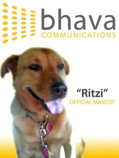 Ritzi - the official mascot of Bhava Communications.    Ritzi was rescued from certain death by Hopalong Animal Rescue, a non-profit organization that has saved thousands of unwanted and abandoned animals from euthanization since 1993.    On March 6, 2010, Bhava Communications participated in the Marin Trails 10K race to raise money for Hopalong Animal Rescue.