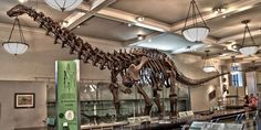 A new study says that the Brontosaurus was real after all http://popme.ch/60194Jr7