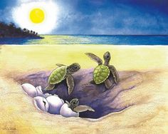 Hatchlings - baby turtles returning to mama
