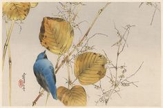 Exotic Blue Bird, 1916, courtesy of Mary Evans Picture Library/Robert Gillmor (Japanese)