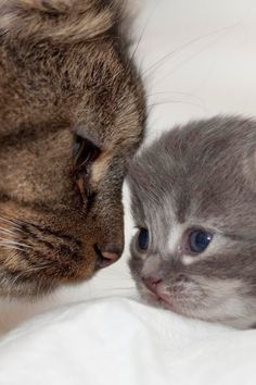 5 Adorable pets with their mothers ~ The Pet's Planet