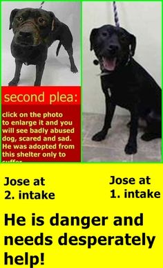11/28 STILL THERE!! SUPER URGENT --- RETURN 11/06/15 DOH – HOLD & LEGAL HOLD FOR POSSIBLE CRUELTY/NEGLECT --- SAFE RTO 1/12/15 Manhattan Center JOSE – A1022687 (Alternate ID # A1057158) MALE, BLACK, PIT BULL MIX, 1 yr, 6 mos SEIZED – ONHOLDHERE, HOLD FOR DOH-B Reason ATT PEOPLE Intake condition UNSP