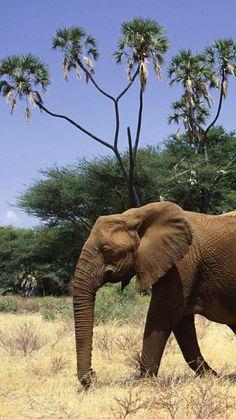 elephants, family, walk, trees, grass