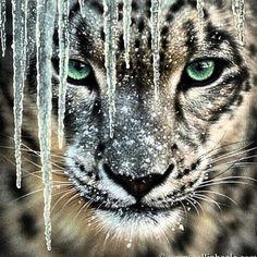 (2) Amazing Animals (@AmazedByAnimals)   Twitter