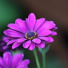 Flowers by Karen