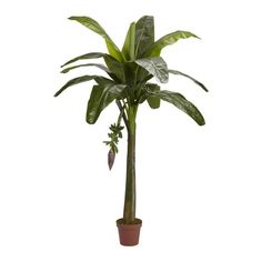 Banana Silk Tree (Real Touch) - 6 Feet Tall >>> You can find more details by visiting the image link.