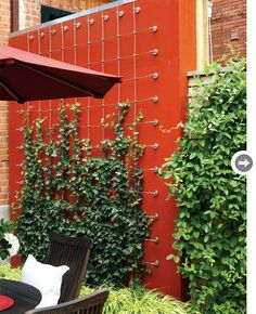 """I wanted to transform the dividing wall into a living wall,"" says garden designer Terry McGlade, so he planted low-maintenance 'Thorndale' ivy and fitted the wall with a grid of stainless-steel cables on which the ivy could climb."
