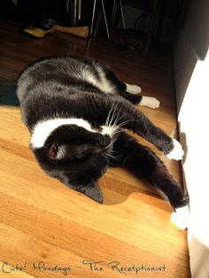 Cute! Asleep on a sunbeam. #cat