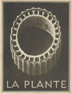 """Karl Blossfeldt """"La Plante"""", 1929"""
