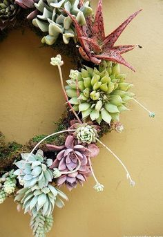 5 easy steps to making a living succulent wreath, crafts, flowers, gardening, succulents, wreaths