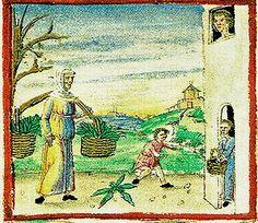 Tacuinum Sanitatis, ca. 1400 Spinach