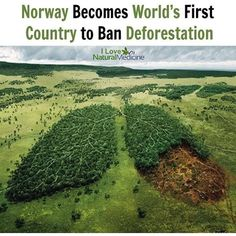 Norway Becomes World's First Country to Ban Deforestation 🌱 🌱 🌱 Link to article in bio! Norway Forest, Forest Department, Love Natural, Save Animals, Save The Planet, Natural Medicine, Global Warming, Home Remedies, Natural Remedies
