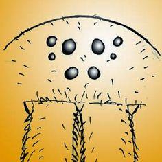 Arranjo ocular. Ctenidae. Insetologia - Identificação de insetos: Arachnida Aranhas