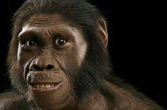 Australopithecus sediba: Half-Human, Half Ape Ancestor Walked Pigeon-Toed - Discovery News
