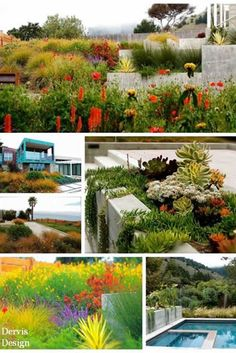 Northern California landscape designer Michelle Derviss shares her design philosophy, how she started in the business, and what element can make or break even the best design. Landscape Design, Garden Design, Stinson Beach, Side Garden, Garden Inspiration, Garden Ideas, Northern California, Curb Appeal, Cool Designs