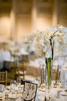 white orchid with greenery