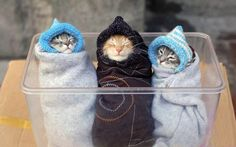 April 4, 2017 we celebrate #NationalBurritoDay. Make sure to eat plenty of burritos and enjoy these three, cute kittens. Click to see the pic.