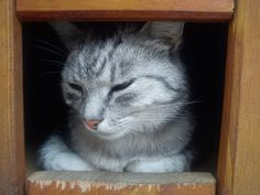 In the cat's house