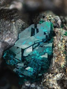 Geology IN: Deep Green Veszelyite Cool Rocks, Beautiful Rocks, Naturally Beautiful, Minerals And Gemstones, Rocks And Minerals, Mineral Stone, Rocks And Gems, Stones And Crystals, Gem Stones