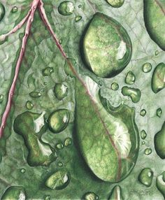 """""""Glistening raindrop, rests, on a leaf, reflecting, the light, that surrounds and warms it, absorbing, the illusion of solid. The leaf underneath, so fragile. ..""""' ~Alyssa McFarland, from 'Raindrop on a Leaf'"""