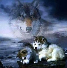This is making me cry with love for these animals! Wolf Photos, Wolf Pictures, Animal Pictures, Beautiful Wolves, Animals Beautiful, Cute Animals, Wild Animals, Indian Wolf, Wolf Artwork
