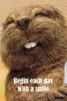 Smile - new day - animal - quotes - beaver - find me on facebook Positief