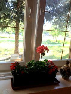Tanya in the Alfold geranium in the window